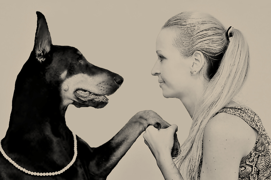 How to Communicate With Your Dog - One Dog And A Man